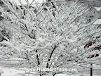 Hammersteam Snow tree.jpg