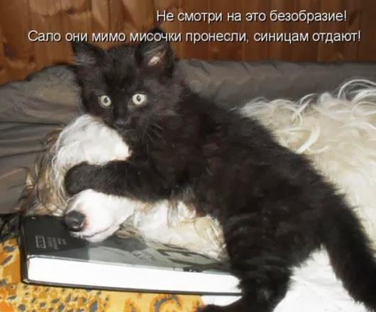 987c2317f119aa141d993880d95_prev
