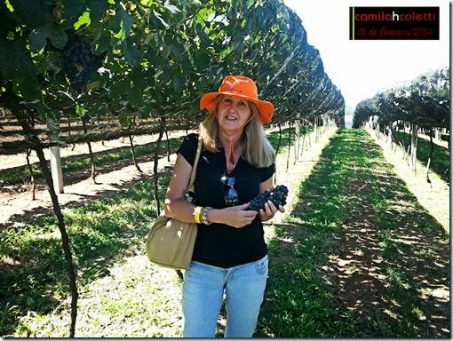vinicola-goes-vindima-2014-vinho-e-delicias9