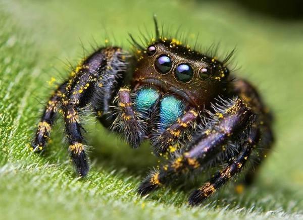 Macrofotografia mostra pequenos monstros vivendo entres 4