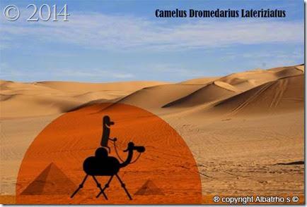 camelus_dromedarius_lateriziatus