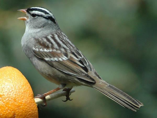 10- Pássaros