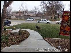 Wildlife in yard (1)