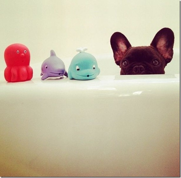 cute-funny-animals-9