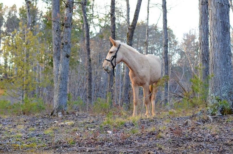 HORSE-6101