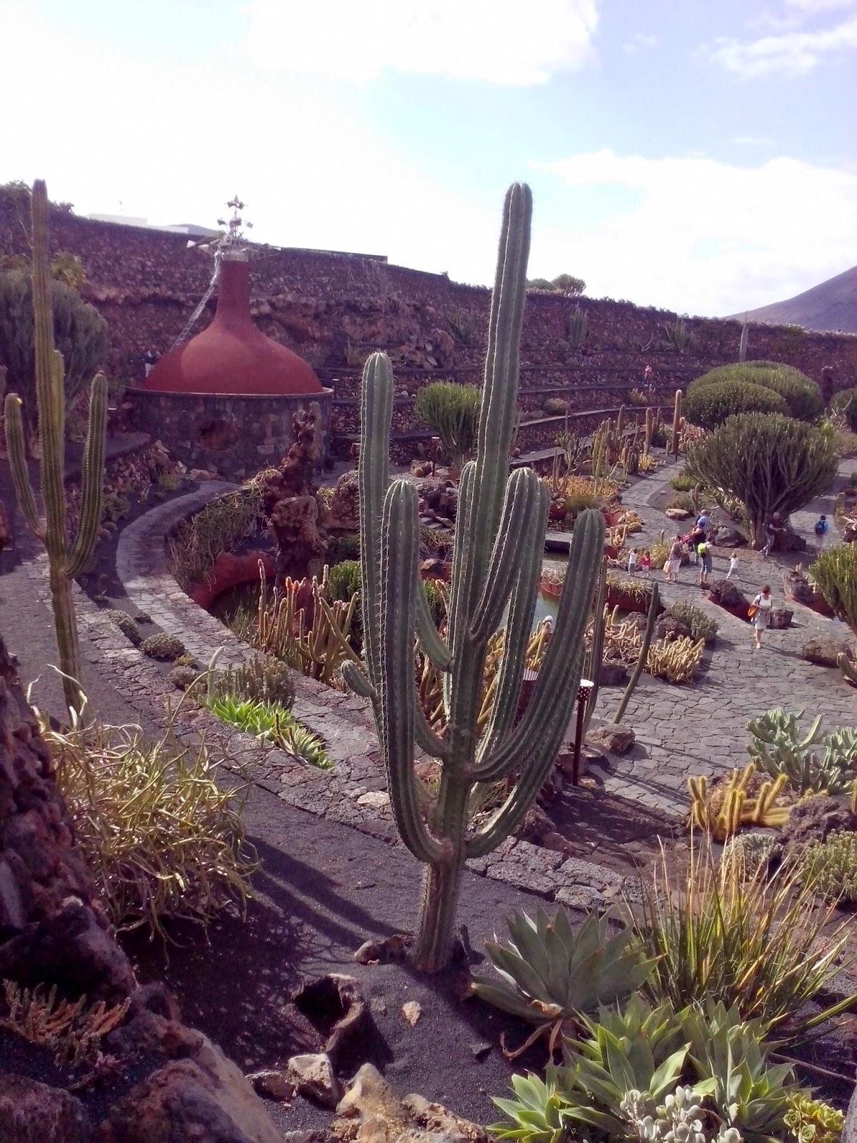 Il mio blog mobile giardino dei cactus - Mobile giardino ...