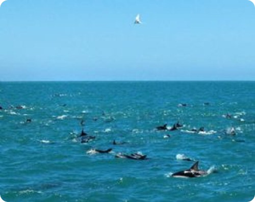 puerto madryn, delfines, patagonia
