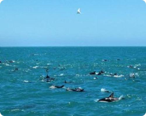 puerto madryn, delfines, patagonia