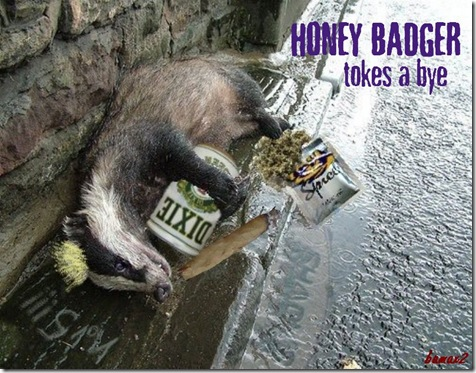 Honey Badger6