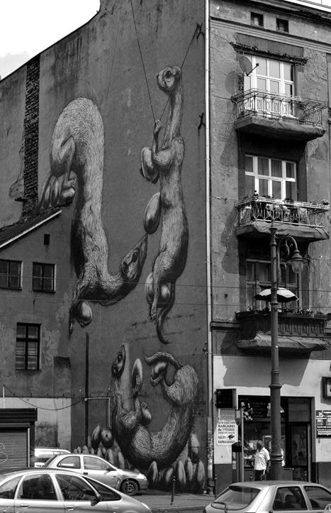 wall ferrets