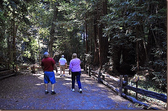 10-01-14 Henry Cowell St Park CA 09