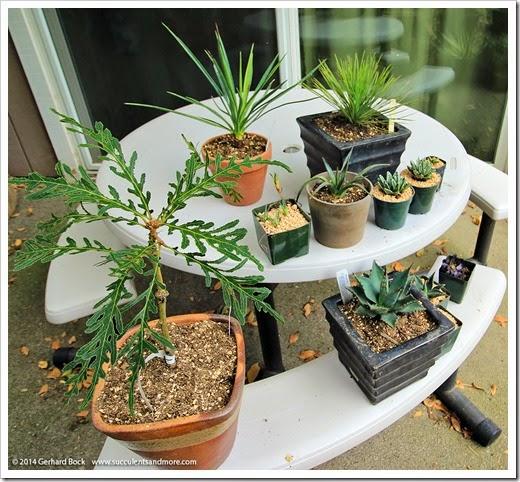 140715_Fling_plants_005