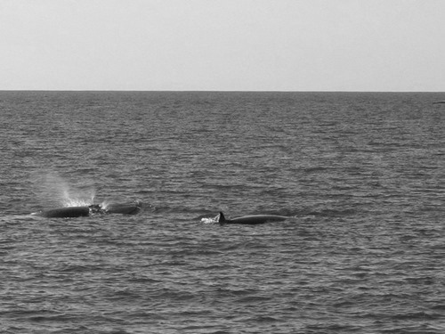 baleias BW