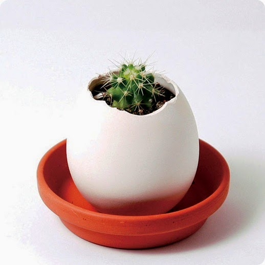 Not On The High Street - Grow A Cactus In An Eff