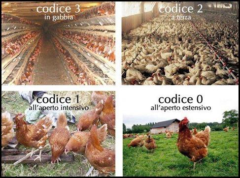Codici uova e tipi di allevamento