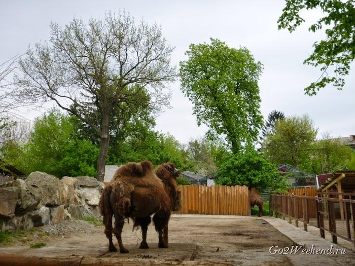 Kiev_Zoo_16.jpg