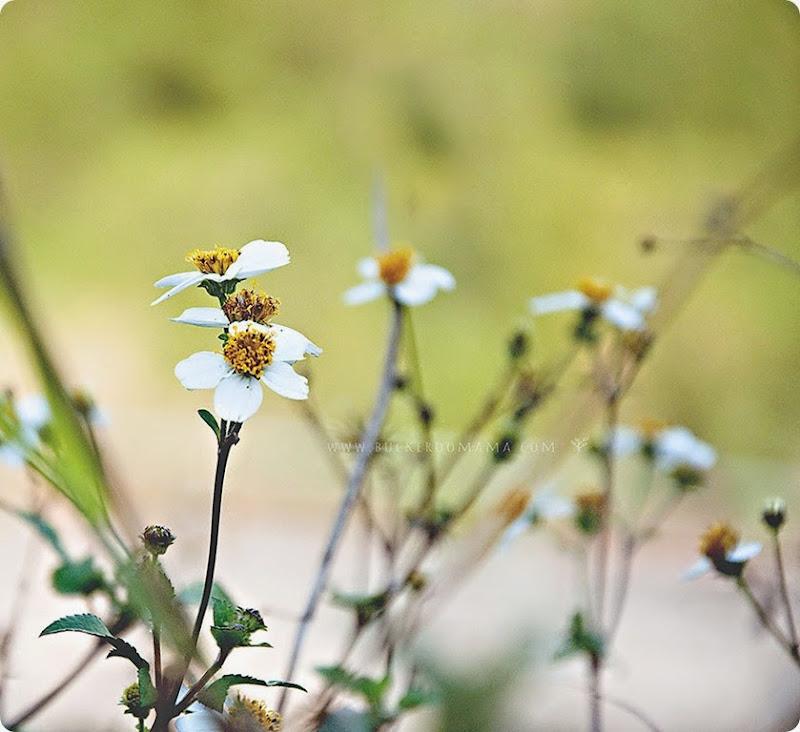 Wild-flowers-(2)
