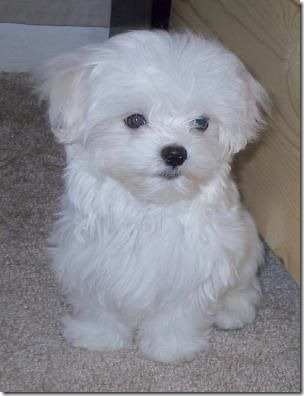 fotos de perritos imagenesifotos.blogspot (3)