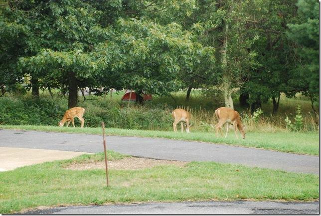 08-25-2011 C Shenandoah NP 044