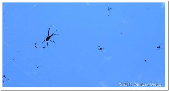 SpidertownP1030348