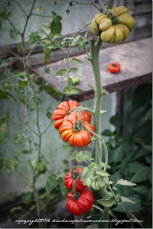 tarta z pomidorami bezglutenowa (40)