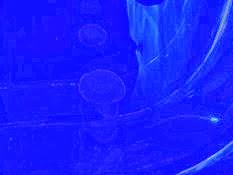 2013.10.26-027 méduses