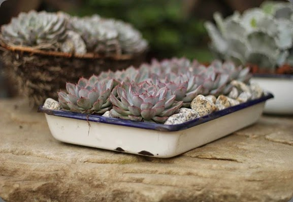 succulents MG FLoral Design FB 1374175_540486999365543_2140977229_n