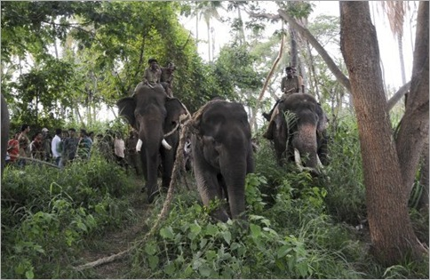 India Elephant Rampage 06