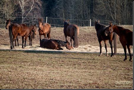 animals_20120421_horses