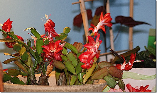 Cactus_Nov13