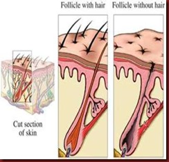 Every hair grows within a hair follicle image