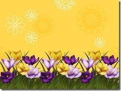 flower-border-backgrounds-wallpapers