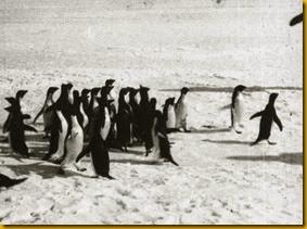 penguinimagenatioinalarchives