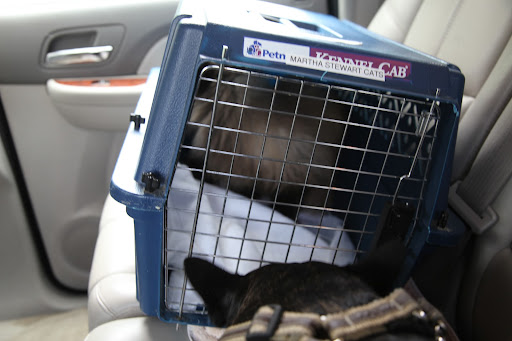 Don't worry, Bartok.  We'll be home soon!  I know you don't like being in that carrier, but you should just do as Sharkey and I do in the car.