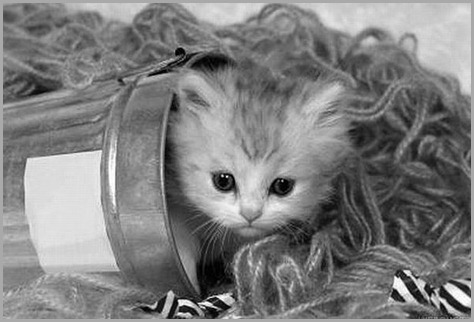 kitten67 - copia - copia