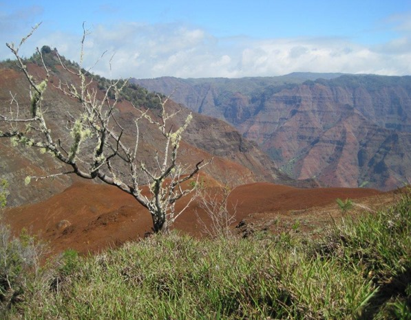 To Waimea Canyon (16)
