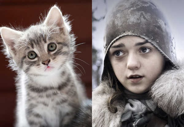 E se os personagens de Game of Thrones fossem gatos 11