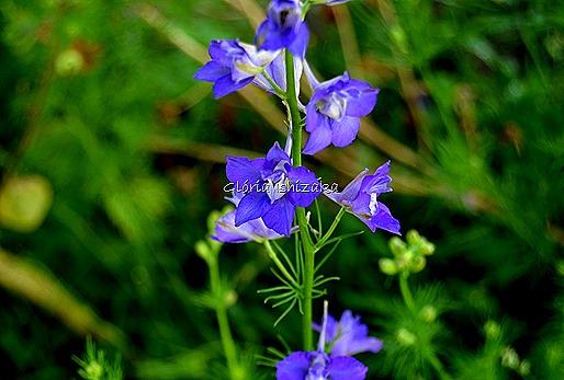 Azul - Glória Ishizaka 38