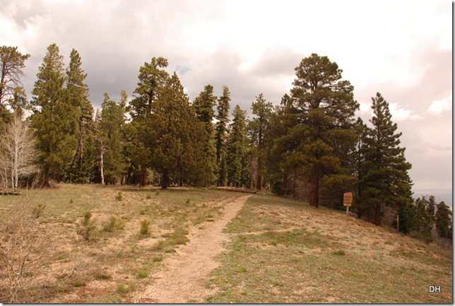 05-18-13 B Kaibab National Forest (20)