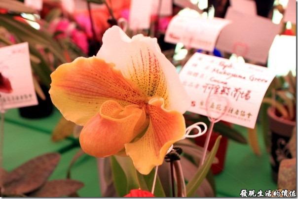 2012台南蘭花展07