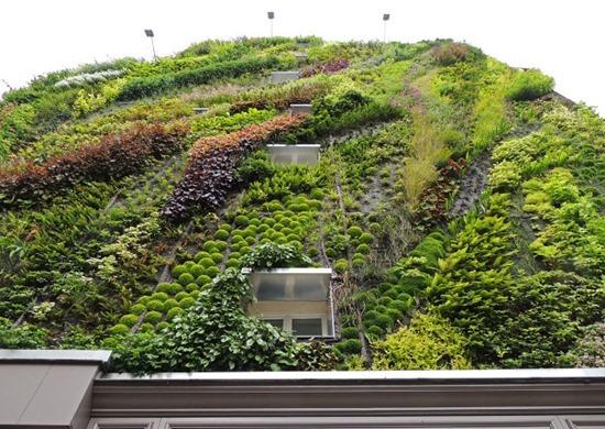 Jardim vertical 10