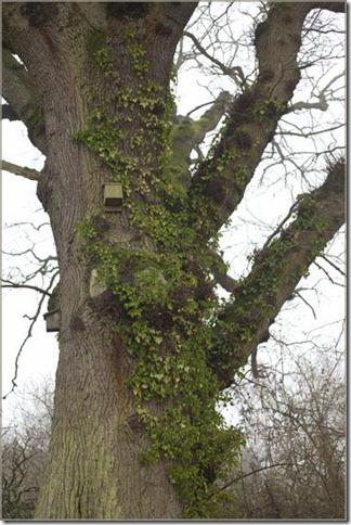 Bird nest boxes on tree