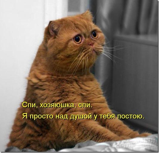 kotomatritsa_Nv