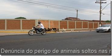 Den. animais soltos nas ruas