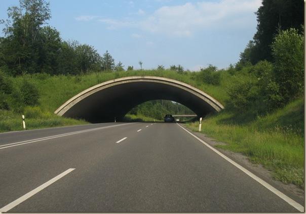 Ponts pour animaux - passages à faune (14)
