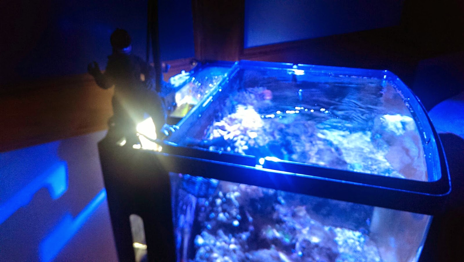 the salty life kessil a150w ocean blue led upgrade to the biocube