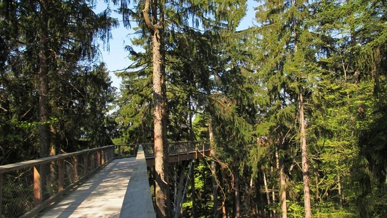 bavaria-treetop-walk-6