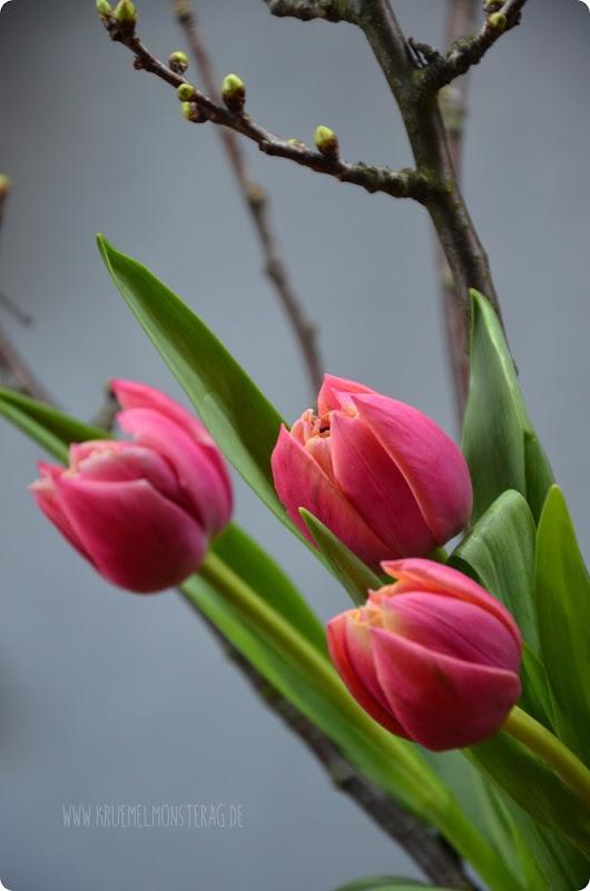 gefüllte Tulpen (03) mit Kirschblütenzweig und Peter Rabbit