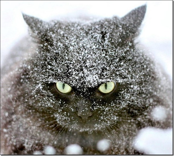cats-play-snow-3