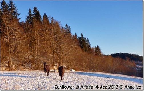 2012-14des-sun_01